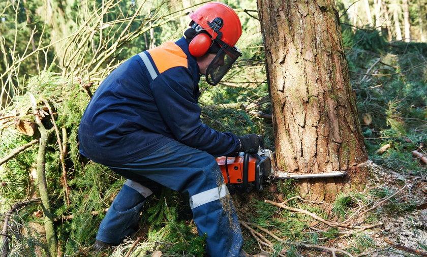 Przerażające znalezisko w pniu drzewa. Zobacz, co odkryli drwale