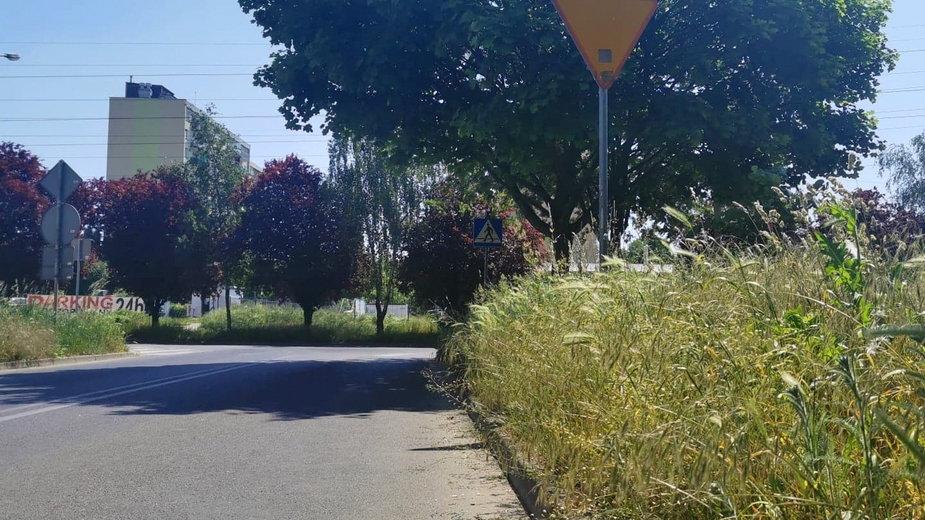 Wysoka trawa na skrzyżowaniu ul. Bora-Komorowskiego i ul. Obrońców Pokoju w Gorzowie