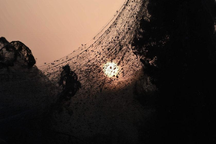 Kilkusetmetrowa pajęczyna pokryła wszystko!