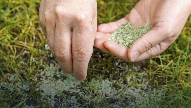 Kwiecień i maj to najlepsze miesiące na siew trawy