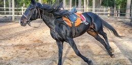 13-latka na koniu zderzyła się z samochodem