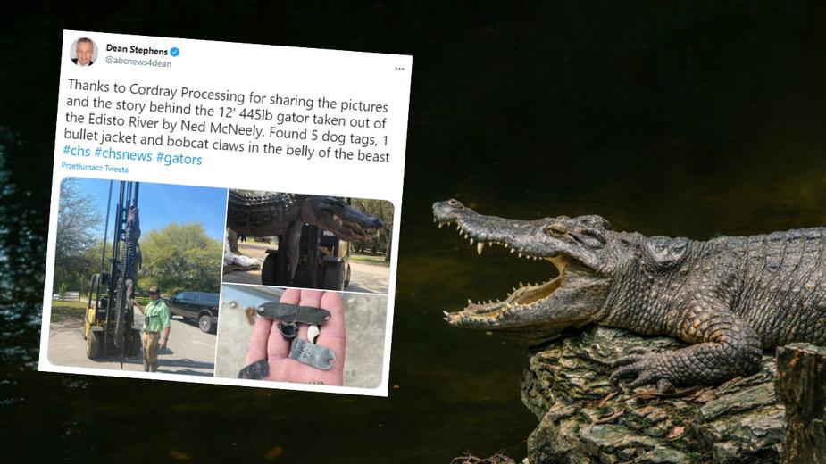 Zaskakujące przedmioty w żołądku martwego aligatora