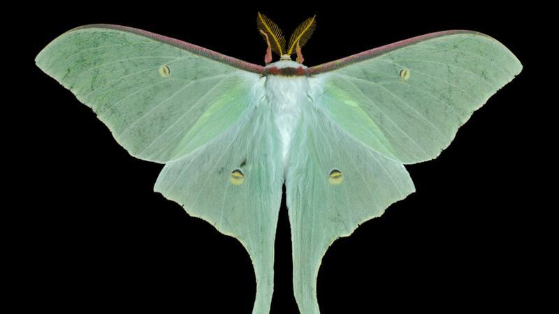 W cieniu ewolucji: Mothman