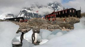 Ruszyła rekrutacja na stanowisko listonosza na... Antarktydzie