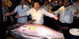 Cena za tuńczyka zwala z nóg!