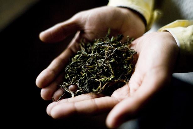 Mimo spadku zbiorów, Indie chcą modernizować sektor przemysłu herbacianego.