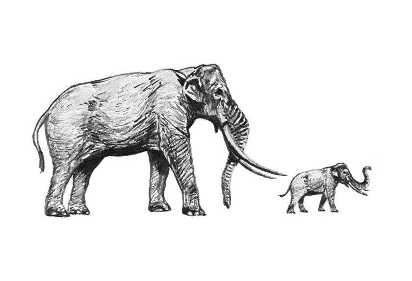 Wykopali drugiego słonia!