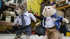 Co oni robią z tymi kotami?! Dziwna moda...