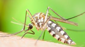 Mieszkańcy Rzymu mają obowiązek walki z komarami tygrysimi