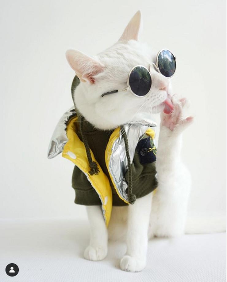 Zapa, najbolje obučena maca na Instagramu