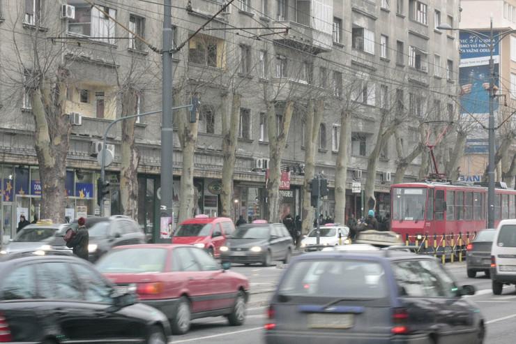 12645_bgd37-drvored-foto-vanja-karlicic
