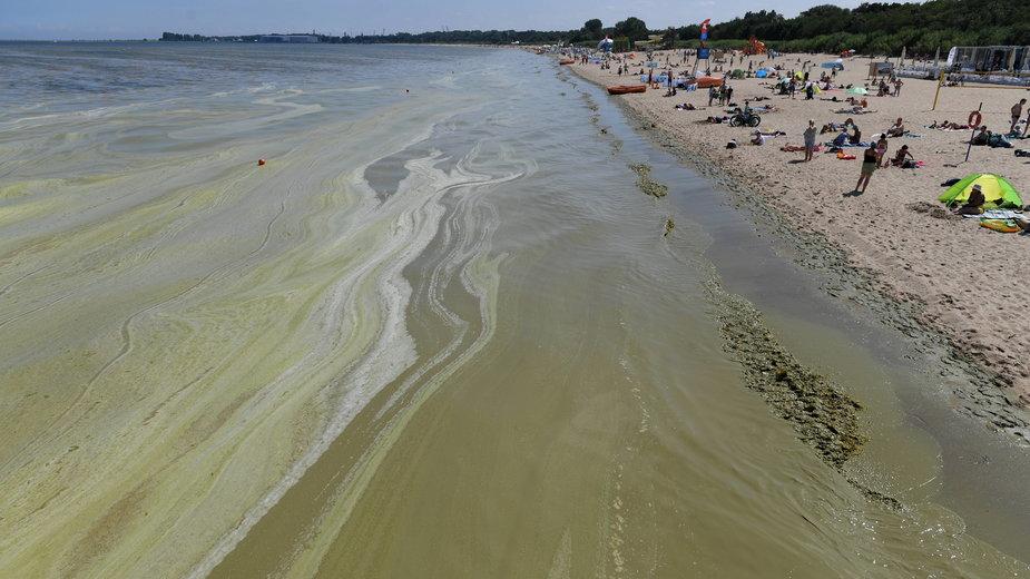 Sinice w Bałtyku. Gdzie woda nie nadaje się do kąpieli? [MAPA]