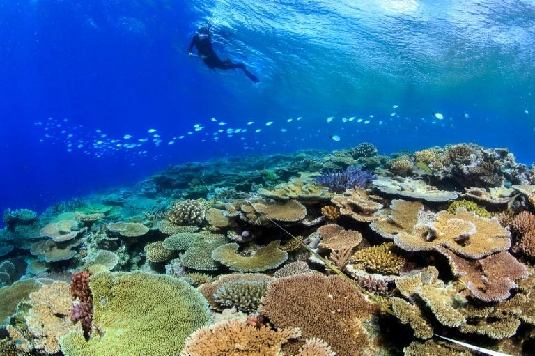 Corals on Australia's Great Barrier Reef that survived bleaching from rising sea temperatures were more resistant to another bout of hot conditions the following year, study shows