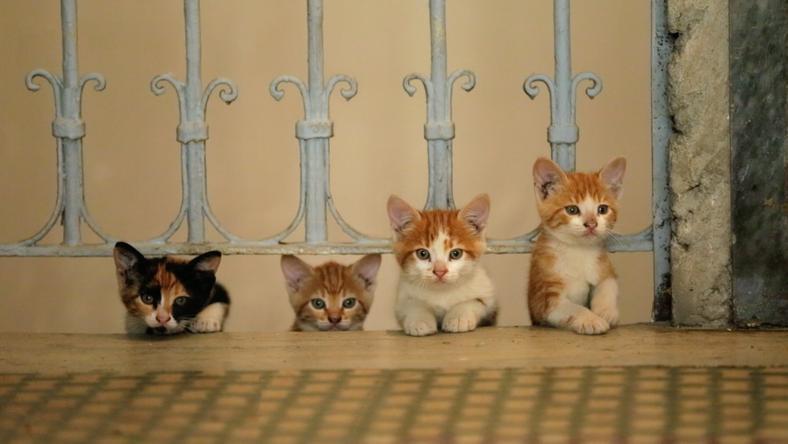 """""""Kedi - sekretne życie kotów"""": kadr z filmu"""