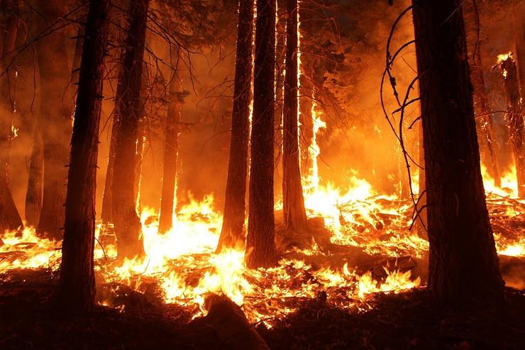 šumski požari