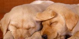 Nie ważcie się budzić śpiących psów!