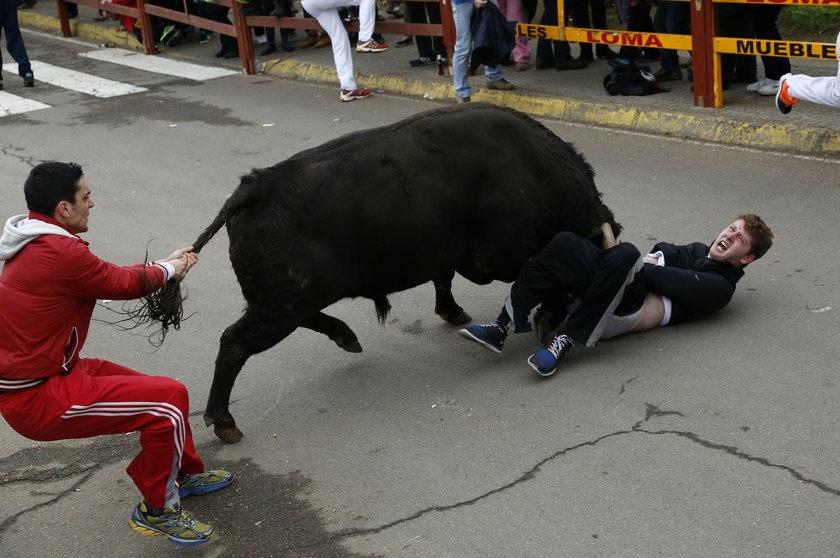 Ugodzony przez byka w... udo