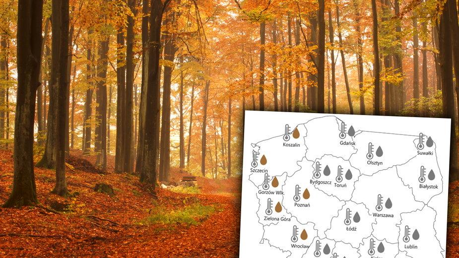 Piękna prognoza pogody na październik! Będzie złota polska jesień?