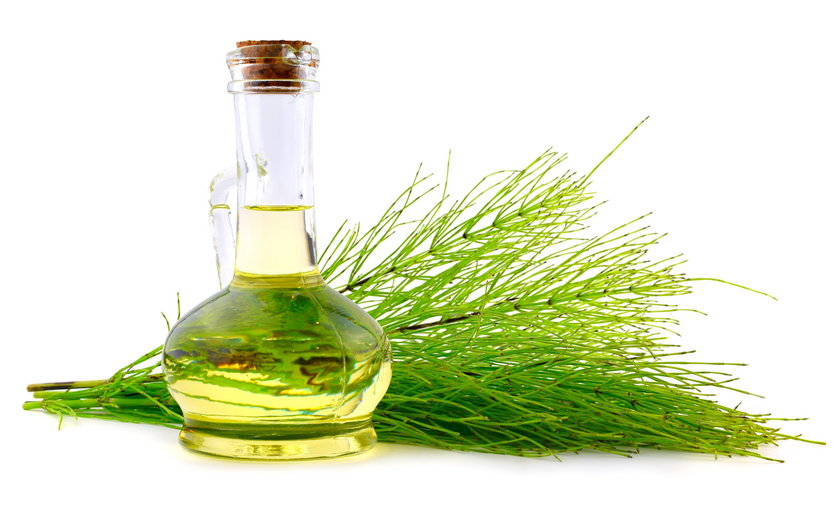 Common Horsetail Medicinal Herb Plant with Distilled Essential Oil Extract and Infusion in a Glass J