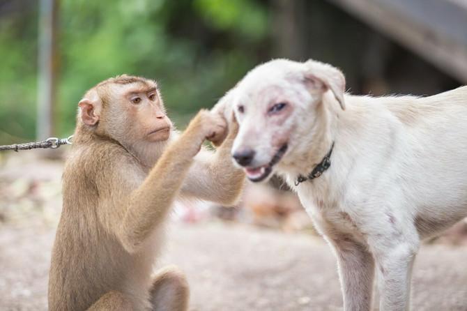 Majmunče čisti psa od buva i krpelja