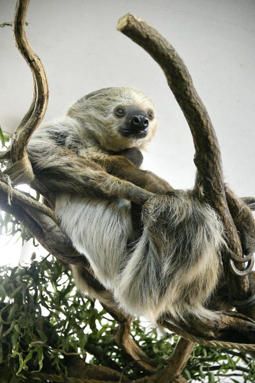 Można odwiedzić wrocławskie zoo