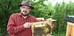 Pszczoły zdobywają miasta