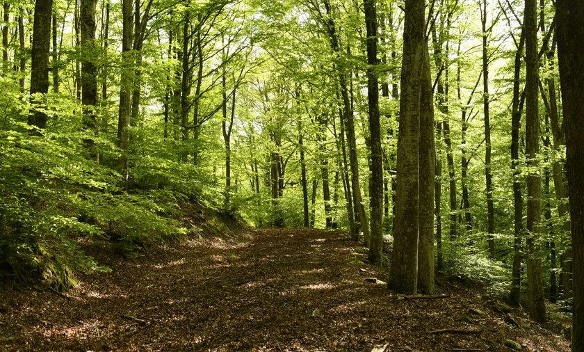Goły mężczyzna grasuje w lasach pod Tarnobrzegiem.