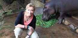 Hipopotam chciał odgryźć Wojciechowskiej twarz!