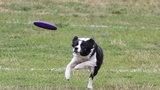 Psie zawody na Polu Mokotowskim