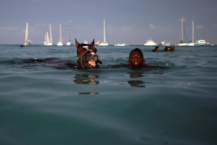 A handler swims with a horse from the Garrison Savannah in the Caribbean Sea near Bridgetown, Barbad