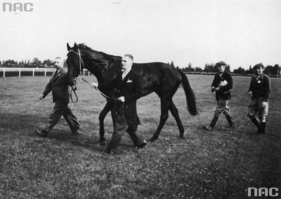 Zwycięski koń Colt prowadzony przez właściciela i trenera M. Molendę, 1939 r.