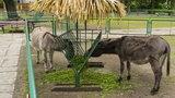 Zoo apeluje: Nie dokarmiajcie zwierząt!