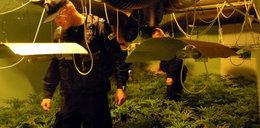 Wietnamczycy uprawiali marihuanę