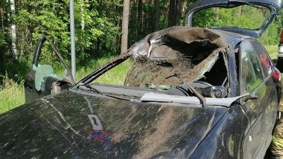 Osowa: Dwie osoby w szpitalu po zderzeniu samochodu z łosiem