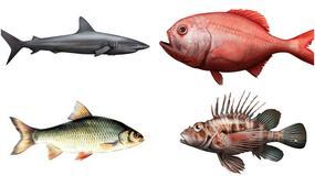 Znasz się na rybach? Uwaga! To naprawdę trudny quiz