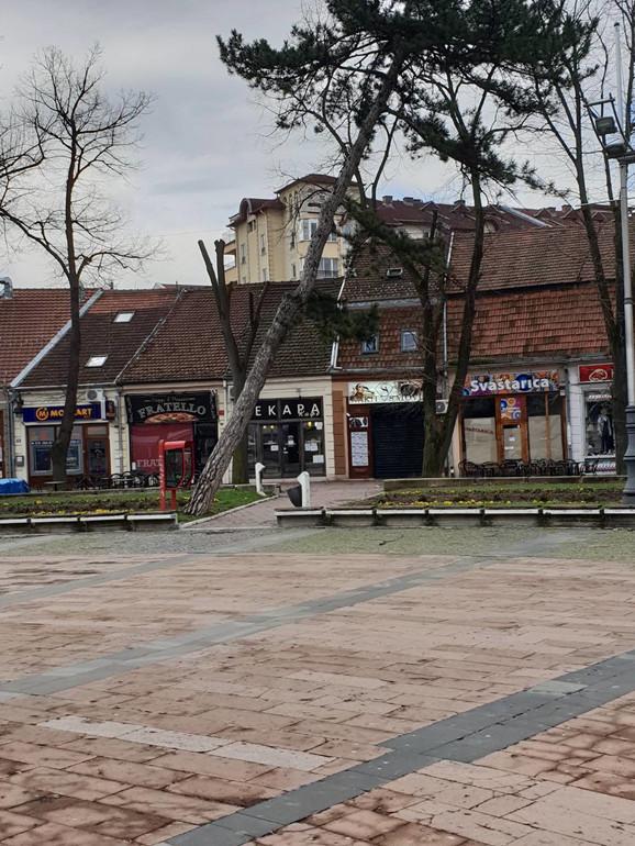 Nakrivljeni bor u centru Kraljeva