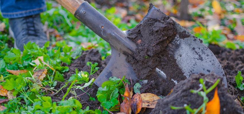 Październik w ogrodzie - co musisz zrobić przed zimą?