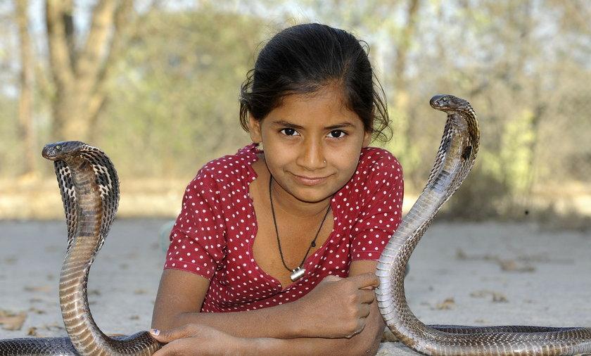 Sypia z jadowitymi kobrami!