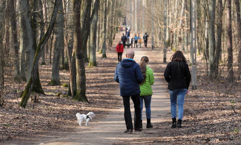 Przebywając w lesie w weekend majowy, musimy pamiętać o obowiązujących w nim zasadach