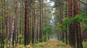 Puszcza Kampinoska: metrem do lasu