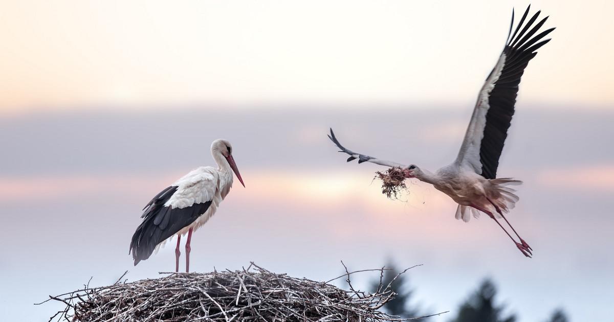 Ptaki w miłości jak ludzie