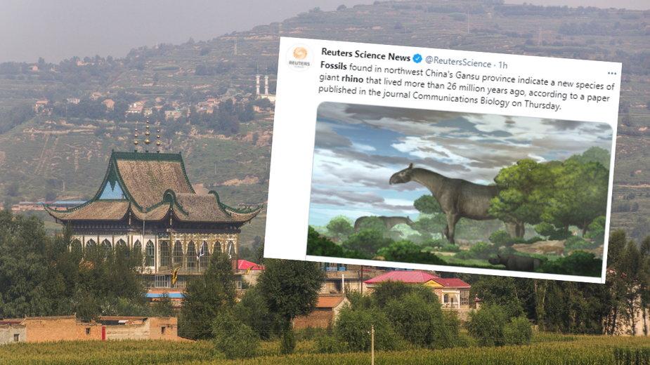 W Chinach odkryto skamieniałości największego ssaka, który chodził po Ziemi