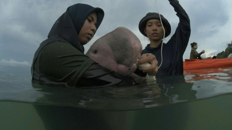 Thailand goes gaga for baby dugong Mariam