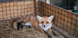 To umieralnia dla zwierząt a nie Safari Park
