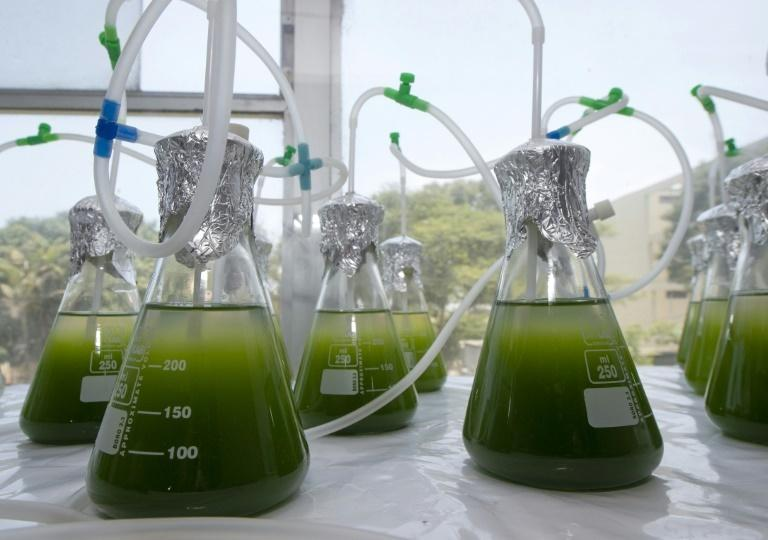 Tiny green microalgae may not look like much but they could provide the solution to depolluting lakes and rivers contaminated with mining waste