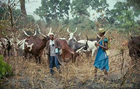 Herdsmen have clashed with crop farmers in Nigeria for decades (Punch)