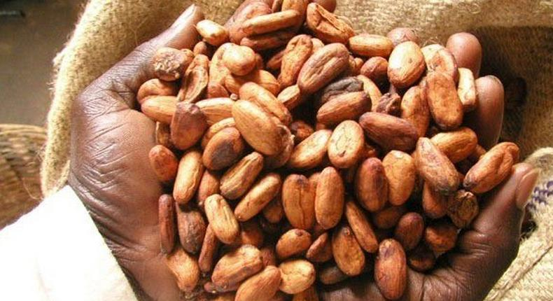Government has agreed on an increase in the producer price of cocoa to the tune of 21.74% for the 2015/2016 crop season effective October 2, 2015.