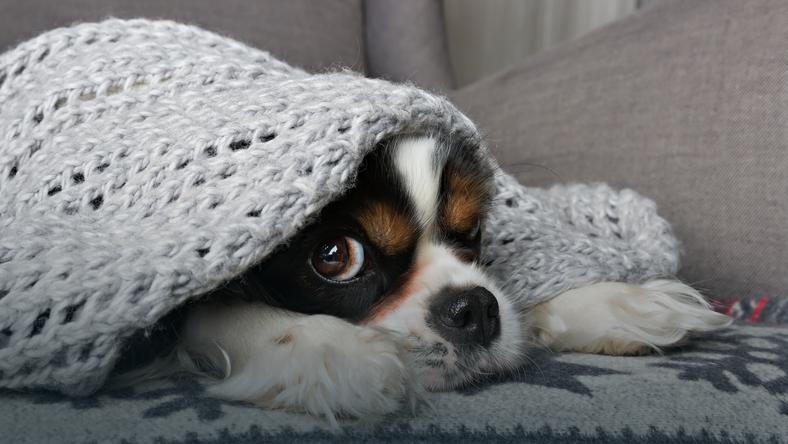 9f111d8c147e3 Ubranie dla psa. Ciepłe okrycie na psa - zobacz wybór ubranek - Kobieta