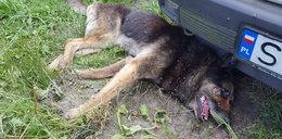 Makabra na Śląsku. Owady żywcem pożerały psa