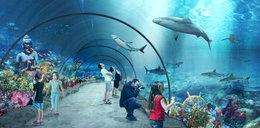 Już możesz zwiedzić nowe zoo. Na razie wirtualnie!